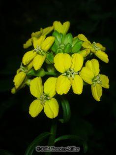 Yellow Flower #theflowershopfairoaks