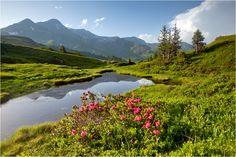 Spring in Alps, Switzerland