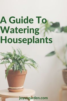 Houseplants are a major part of home decor. This watering indoor plants guide will tell you how to water houseplants as well as how often to water houseplants. Watering houseplants is simple if you use this watering houseplants guide. #houseplantcaretips #indoorplantcaretips Easy Care Indoor Plants, Plant Guide, House Plant Care, Self Watering, Snake Plant, Potting Soil, Back Off, Types Of Plants, Hanging Plants