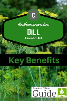 Dill essential oil k