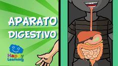 El Aparato Digestivo y la Digestión | Videos para Niños