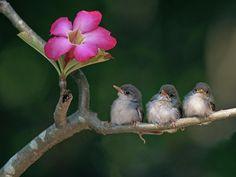 Cute Small Birds Photograph  - Fine Art Print