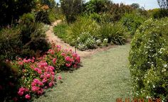 If you'd love to transform your garden into a flourishing Fynbos garden, here are tips from experienced indigenous gardener, Alta Barnard. Waterwise Garden, Fynbos, Starting A Vegetable Garden, Different Plants, Garden Design, Garden, Back Gardens, Plants, Planting Flowers