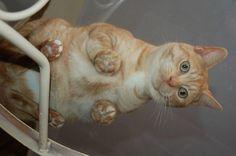 Gato fotografado em mesa de vidro