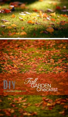 Fall Garden Checklist: 10 Things to do this time of year!
