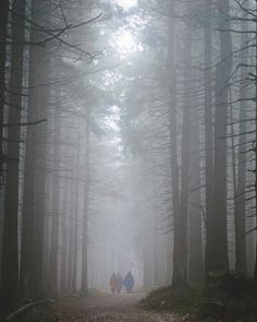 Hiking from Schierke to East of Brocken. Harz trip day 2 (2/6)  #landscape #fog #foggy #easter #spring #hiking #nature #hike #outdoors #wanderlust #travel #adventure #naturelovers #schierke #brocken #harz #germany # #colorgrading #latergram #wildernextgen #sony #sonya6000 #a6000 #sonyalpha #alphacollective #sonyalphateam #latergram #wildernextgen #sony #sonya6000 #a6000 #sonyalpha #alphacollective #sonyalphateam