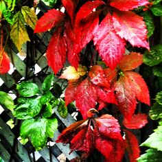 Signes d'automne