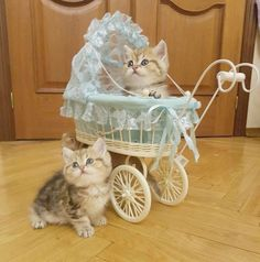 How come she gets to sit in the pram?Tap the link to check out great cat products we have for your little feline friend!
