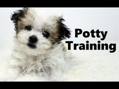 House training a puppy requires patience, positive reinforcement and consistency. Puppy Training Tips, Potty Training, Training Your Dog, Stop Puppy From Biting, Puppy Biting, Pet Tips, How To Train Your, Dogs And Puppies, Pets