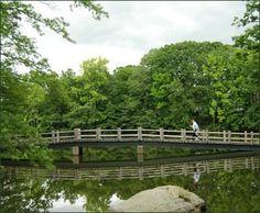Image result for golf course ponds images