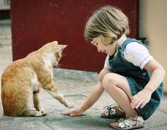Dame una mano gatito