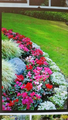 Flower Bed Border Ideas   Alyssum, Begonia And Ornamental Grass   Great  Color Combination