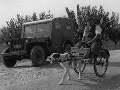 """The dog of the war veteran"" (war invalid on a dog cart (Pescara) ). tony vaccaro Photo, October 1946."