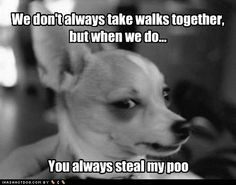 We don't always take walks together, but when we do… you always steal my poo.   LOLOLOLOLOL