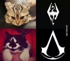 Assasin Cat