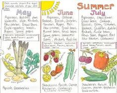 fruit & veg in season chart uk - Google Search