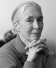 Jane Goodall - Primatologist, ethologist, anthropologist, and UN Messenger of Peace Jane Goodall, I Look To You, Looks Black, Portraits, Aging Gracefully, Famous Faces, In Kindergarten, Good People, Strong Women
