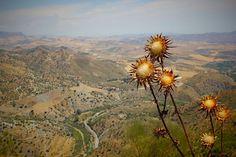 Blue, Sky, Desert, Hills, Dry, Bushes, Flowers, Trees