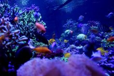 Reef Aquarium, Saltwater Aquarium, Good Fellows, Hello To Myself, Red Sea, Corals, How To Introduce Yourself, Cool Photos, Led
