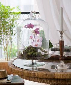 O arranjo com orquídeas e musgos, da Bothanica Paulista, aparece dentro da campânula de vidro | flower arrangement | Foto: Evelyn Muller/Editora Globo