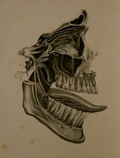 The Anatomy, Physiology, and Pathology of the Human Teeth (1844) by Paul B. Goddard.