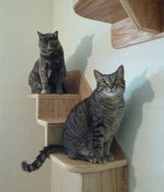 The Vertical Cat's Cat Stairs - Contemporary Cat Furniture, Trees, Shelves and Stairs | Our Wall Mounted Cat Climbing System