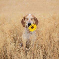 Ein Hund mit einer Blume