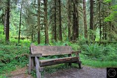 Forest Bench: Olympic National Park