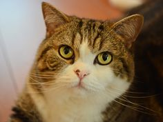 THIS JUST IN: Holy Hairballs, There's A Maru 2