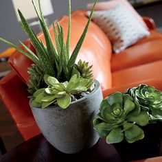 Interior Design Trends: Natural Elements. Aloe and Succulents in Pot - Ethan Allen US