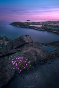 When colors lign up fitting flowers in a moody long exposure of a pinkish sunset along the south coast of Norway Nevlungshavn [OC] [1920x1280] - Ron_Jansen - #travel #photography #adventure #amazing #beautiful