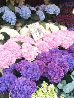 Hydrangeas columbia road flower market