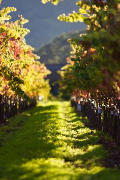 Fall Sunset in Napa Valley Vineyard Napa Valley, Toscana Italia, Wine Vineyards, Vides, Italian Wine, Wine Time, Wine Country, Wonders Of The World, Countryside
