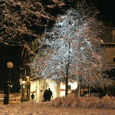 Harrogate at Christmas - Ideal white Christmas tree lights for indoor or outdoor use these LEDs are bright and energy efficient.