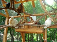 Natural branches for roosting: http://www.backyardchickens.com/forum