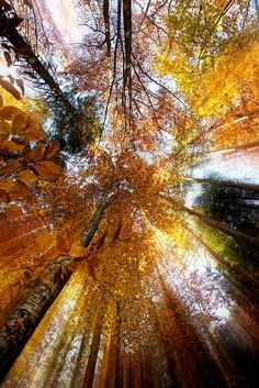 Golden rays by Ivan Vukelic on 500px