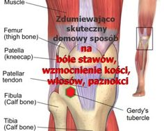 PrzepisyNaZdrowie.pl-zdumiewajacy-sposob--mikstura-na-bole-stawow-wzmocnienie-kosci-wlosow-paznokci Anti Inflammatory Diet, Knee Pain, Arthritis, Dna, Natural Remedies, Education, Drinks, Health, Blog