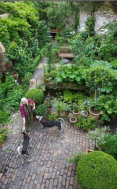 Artists small garden in London