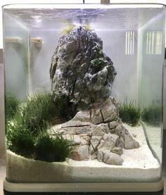 Nano Tank, Vivarium, Aquascaping, Aquariums, Terrarium, Tanks, Empty, House Design, Goals