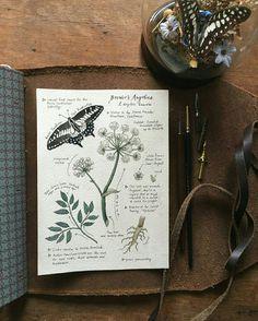 Pin by aj yancy on traveler's notebooks art sketchbook, nature journal, botanical Kunstjournal Inspiration, Sketchbook Inspiration, Art Sketchbook, Wicca, Nature Journal, Journal Pages, Journals, Notebooks, Book Of Shadows