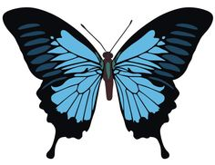 Papilio ulysses butterfly vector