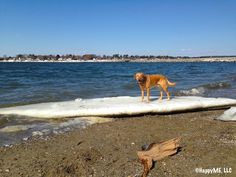 Ice Melt Alert – The Maine Dog Days of Summer Are Coming - See more at: http://happymestuff.com/the-maine-wag/ice-melt-alert-the-maine-dog-days-of-summer-are-coming/#sthash.0oZ9361o.dpuf
