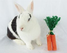 3 Pk Carrot Rabbit Toy 3 Pk Carrot Rabbit Chew Toy