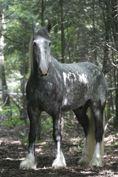 Image result for gray horses