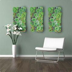 Living Wall (Succulents)