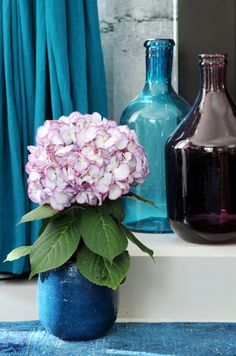 Small Vase and Light Pink Hydrangeas #plants