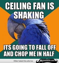 Paranoid Parrot: ceiling fan is shaking...