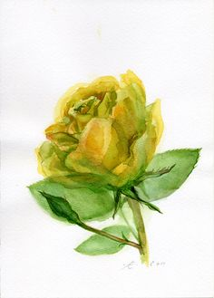 Flower Fine Art Print Yellow Rose Painting by VerbruggeWatercolor, $18.00