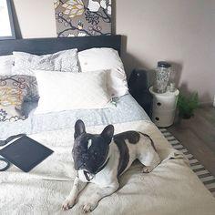 """Journee de pluie, journee au lit .... l'occasion de lire notre article """"file dans ta chambre"""" entre 2 episodes sur Netflix . Au passage petit coucou de Hadès #jemetapelincruste. _____________________________ Keidueblog  #archilover #archi #design #designer #interiorlovers #interior #frenchbulldog #dogoftheday #bulldog #decoration #madecoamoi #interiør #montpellier #fermliving #home #life #chezmoi #bedroom #kartell #ikea #habitat #instadeco #instadog #zara"""