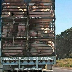 You don't need meat, pork, pultry to survive. If you eat it and you are aware of where your food comes from, you knowingly support all animal abuse, suffering. The blood is on your hands even if you turn a blind eye! Animal Slaughter, Vegan Facts, World Hunger, Vegan Quotes, Why Vegan, Stop Animal Cruelty, Vegan Animals, Food Industry, Animal Welfare